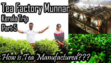 How Tea is Manufactured? | Munnar Tea Factory Visit